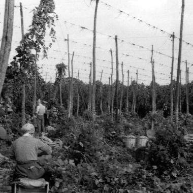 Hops - selling the skin of uncaught bear
